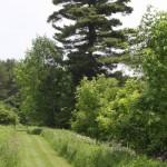 trails15