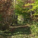 trails18