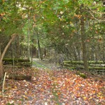 trails22modified