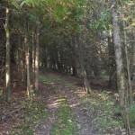 trails23