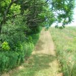 trails26