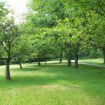 Relax in the orchard